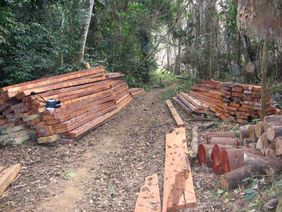 A pile of sawn logs and a logging trail in the reserve