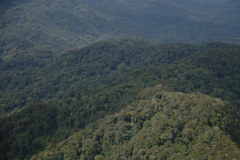 News Archive - Berggorilla & Regenwald Direkthilfe e V