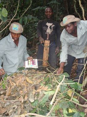 Peter Tipa, Moses Takia and hunter Prince Ebole with a gorilla nest (© WCS Takamanda-Mone Landscape Project, Cameroon)