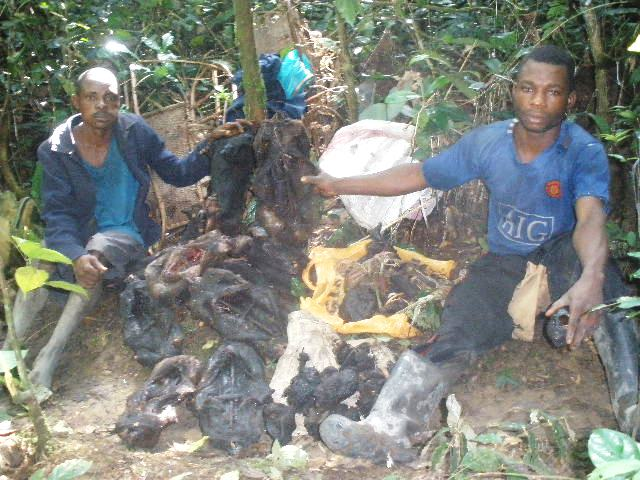 Poachers arrested in the park