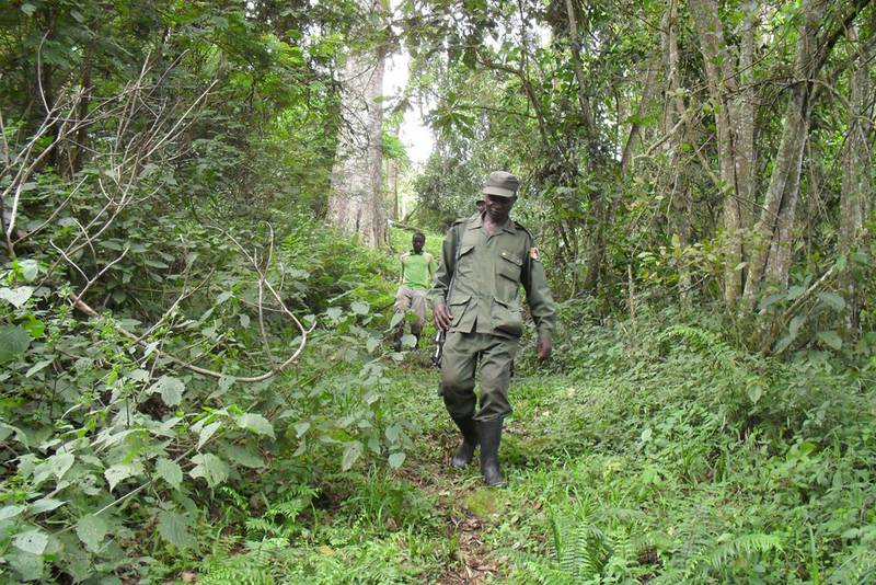 Ranger patrol on a trail that marks the boundary of the Sarambwe Reserve (© Augustin Rwimo)
