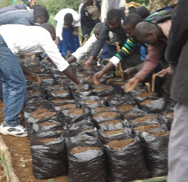 Planting of passion fruit seeds in sacks at the Vurusi nursery