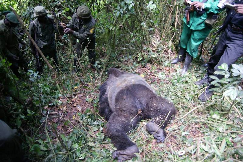 Mufanzala's body as the rangers found it