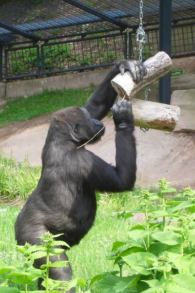 Zoo genetics a complicated science