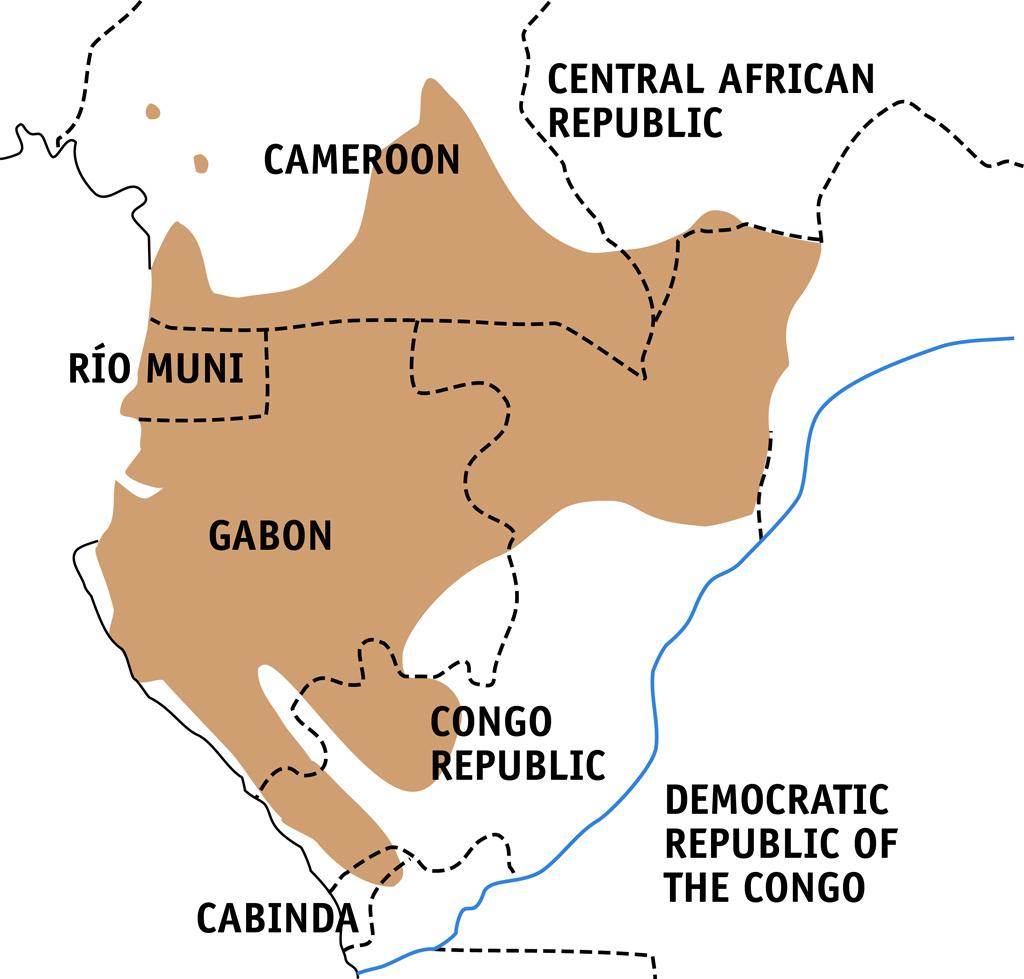 Critically Endangered Western Lowland Gorilla Born in